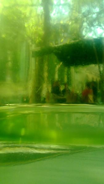 la bouteille verte